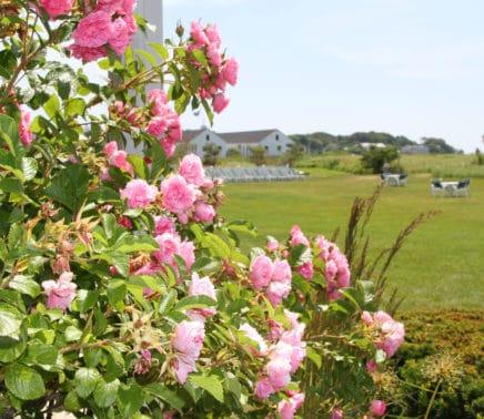 Roses_porch2