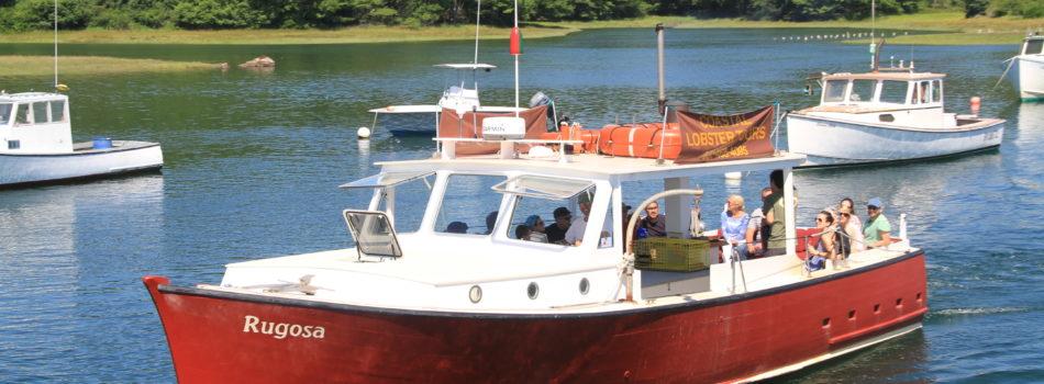 Rugosa-lob-boat-tours