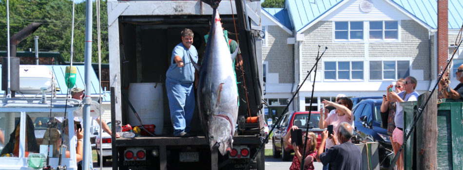 Tuna-govt-wharf-kennebunkport2